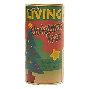 The Jonsteen Company Nation's Christmas Tree (Giant Sequoia) | Seed Grow Kit 30