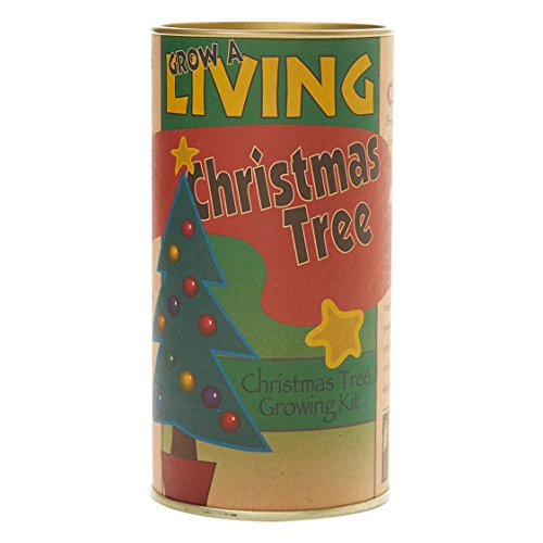 The Jonsteen Company Living Christmas Tree | Seed Grow Kit ()