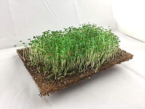 Microgreens Coco Fiber Pads with Natural Rubber - Growing Kit 100