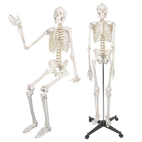 Medical Halloween Decorations (F2C 180cm/70.8