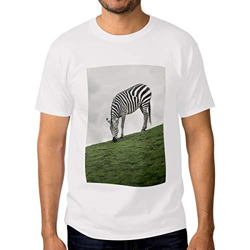 Excellent Zebra Eat Grass Slope Balloon T-Shirt Short-Sleeved Round Neck Print Unisex White T-Shirt-M