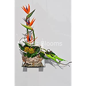 Tropical Orange Birds of Paradise Floral Arrangement with Succulents and Greenery 64