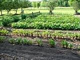 The Dirty Gardener Carrot/Bush Bean/Peas/Corn/Lettuce/Cucumber Vegetable Garden Starter Seed Pack – .25 Pounds Each Review