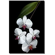 """Senchefy™ Stretched Canvas Art Floral Orchid Bloom , 20"""" x 28"""""""