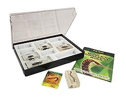 Bug Collector Case #1