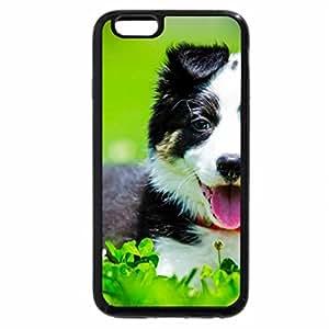 iPhone 6S Plus Case, iPhone 6 Plus Case, Dog