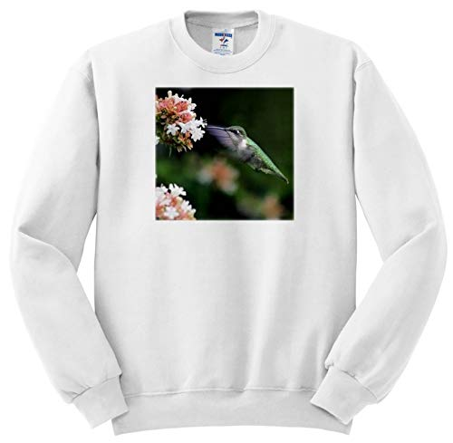 Price comparison product image 3dRose Stamp City - Birds - Photo of Female Ruby-Throated Hummingbird Enjoying Some Abelia Nectar. - Sweatshirts - Youth Sweatshirt XS(2-4) (ss_291292_9)