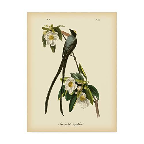 James John Fork Audubon (Trademark Fine Art Fork Tailed Flycatcher by John James Audubon, 24x32-Inch)
