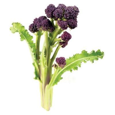 Purple Sprouting Broccoli (Brassica Oleracea) Vegetable Plant Heirloom Seeds : Garden & Outdoor