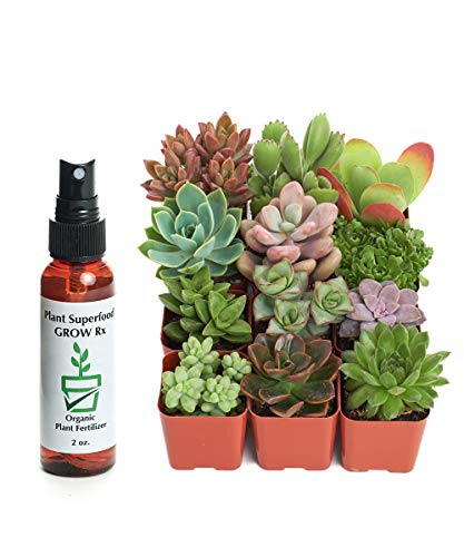 Unique Succulents with 2 oz Liquid Organic Plant Food, Pack of 12 by Shop Succulents