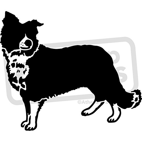 A5 'Border Collie Sheepdog' Wall Stencil / Template (WS00025556)