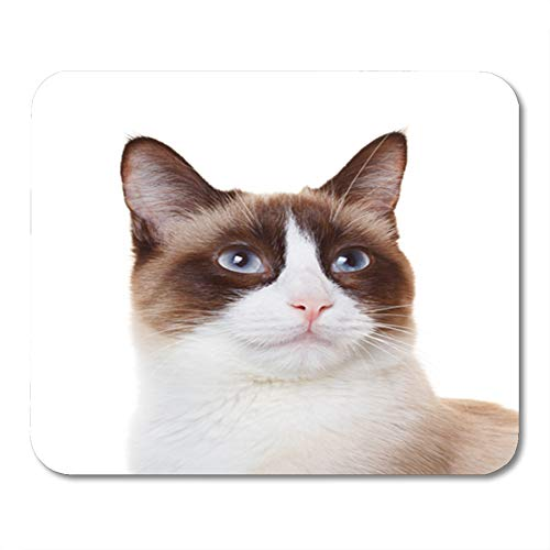 "Semtomn Mouse Pad Rubber Mini 9.5"" x 7.9"" Rectangle Brown Snowshoe Cat Portrait Closeup White Adorable Gaming Notebook Computer Accessories Backing"
