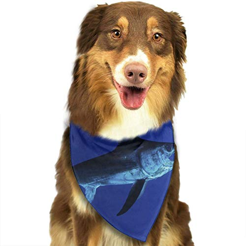 SYWY Washable and Long Lasting Bandanas Fastest Fish in Ocean Pet Dog Cat Bandanas Triangle Bibs Pet Scarf Dog Neckerchief Headkerchief Pet Accessories