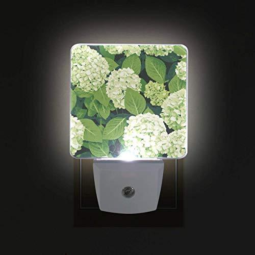 Hydrangeas Flowers 2 Pack Plug-inLED NightLight,SmartDusktoDawnSensor, AutoON/OffNiteLight for BedroomBathroomHallwayKitchenStairsKidsNursery ()