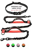Pet Dreamland Hands Free Dog Leash for Running - Hiking, Walking, Dog Training - Waist Leash for Dogs