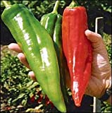 NuMex Big Jim Chile Pepper 10 + Seeds - 12 Inches Long!