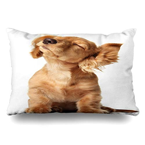 Ahawoso Throw Pillow Cover King 20x36 Head Brown Pet Cute Puppy Shaking Listening Pedigreed Music Dog Shake Hair Small Studio Dachshund Design Zippered Cushion Case Home Decor Pillowcase