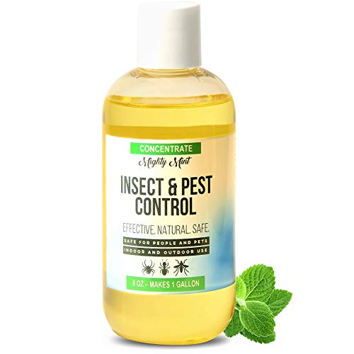 Mighty Mint - 8oz Insect and Pest Control Peppermint Concentrate - Makes a Gallon - Natural Spray for Spiders, Ants, and More - Non Toxic