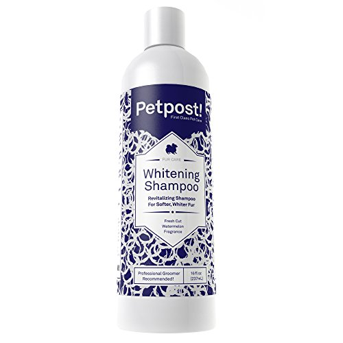 (Petpost | Dog Whitening Shampoo - Best Lightening Treatment for Dogs with White Fur - Soothing Watermelon Scent - Maltese, Shih Tzu, Bichon Frise Approved - 16 Ounce)