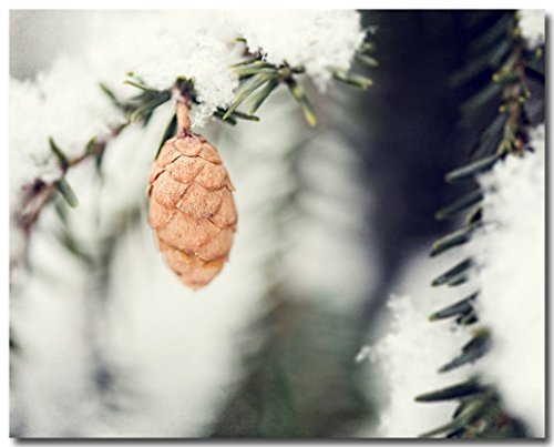 Rustic Pinecone Christmas Nature Photograph - Evergreen Pinecone Wall