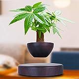 12V 2A Magnetic Floating Succulent Plant Bonsai Pot, 360° Rotatable Flower Pot Suspension Levitating Plant Pot Desktop…