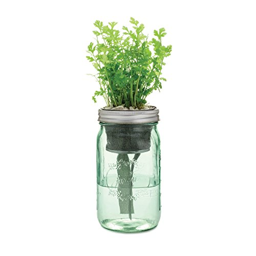 Modern Sprout MS-GS-1004 Indoor Cilantro Herb Kit (7 Items)