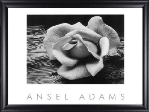 - Rose Driftwood Flower Ansel Adams 24x20 Gallery Quality Framed Art Print Landscape B&W Photography