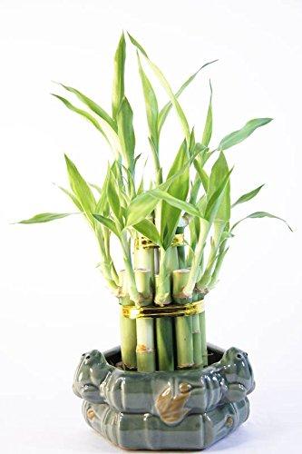 Athena's Garden Fresh Lucky Bamboo Tower Handmade Animal Figurine Ceramic Pot, One Size, Green/Red/White