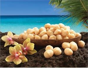 Macadamia Nuts Dry Roasted Sea Salt MacFarms 12oz by MacFarms (Image #2)