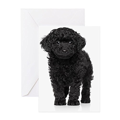 Poodle Note Card (CafePress - Toy Poodle Puppy Over White Backgrou - Greeting Card, Note Card, Birthday Card, Blank Inside Matte)