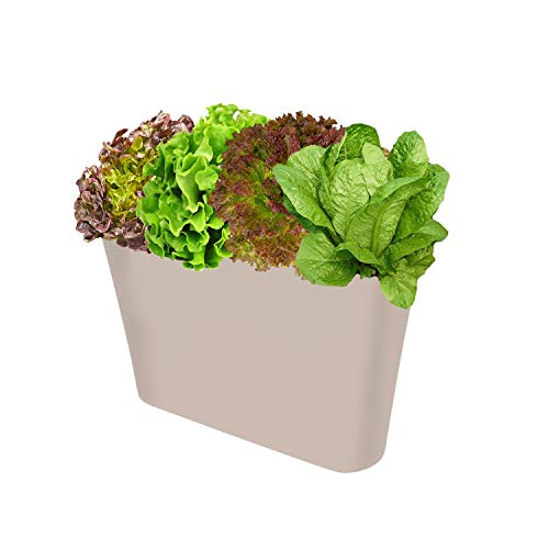 Ergo Self Watering Planter Pot - Indoors, Outdoors Planters Box, Modern Gold Rectangular Plant Container for Windowsill - Grow Flowers, Herbs Easily, by SavvyGrow (Gold)