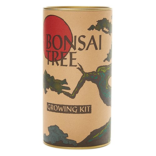 Bonsai Tree (Japanese Black Pine) | Seed Grow Kit | The Jonsteen Company