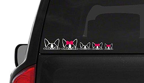 Terrier Auto Car - Peeking Boston Terrier Family (F21) Vinyl Decal Sticker Car/Truck Laptop/Netbook Window