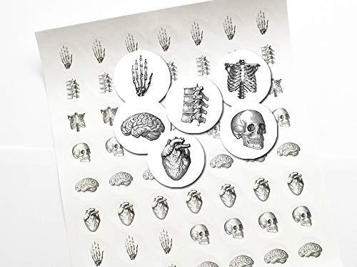 Anatomy 1 inch Stickers skull brain hand anatomical heart labels envelope -