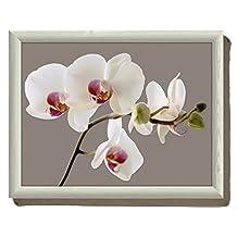 Creative Tops Orchid Harmony Beanbag Cushion Lap Tray, Multi-Colour