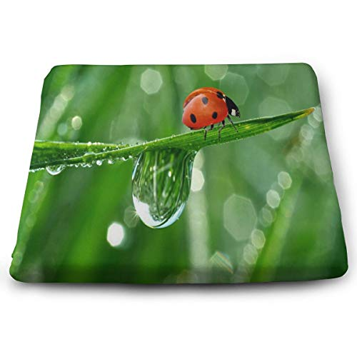 Seat Cushion Ladybugs Cute Chair Cushion Designer Offices Butt Chair Pads for Outdoors