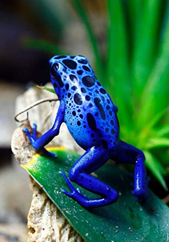 (Blue Poison Dart Frog Notebook -- Creative Journal: LINED, College Ruled, 7x10, Cream Paper, 184 Pages)