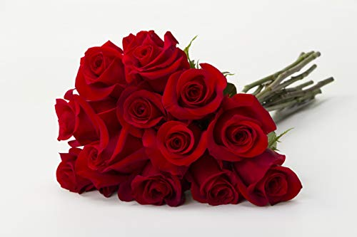 - Martha Stewart Roses by BloomsyBox - One Dozen Perfect Red Freedom Rose Selected by Martha and Hand-Tied, Long Vase Life