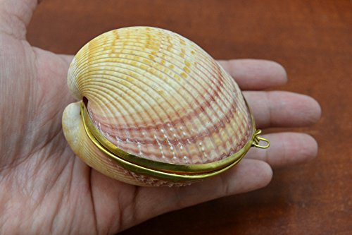 Cardium Pesodolima Sea Shell Trinket Box Purse (Trinket Shell Box)