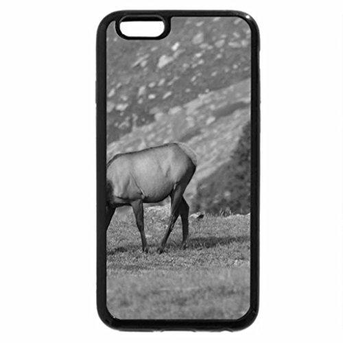 iPhone 6S Case, iPhone 6 Case (Black & White) - Cow Elk