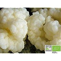 Live Organic RAW Leche KEFIR granos – Césped