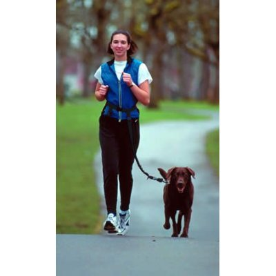 The Buddy System – Hands Free Leash – Regular Dog System – Black Regular, My Pet Supplies