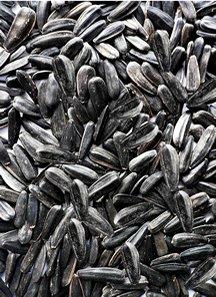 Commerce Black Oil Sunflower Seed for Wild Birds 50 LBS by Schaeffer
