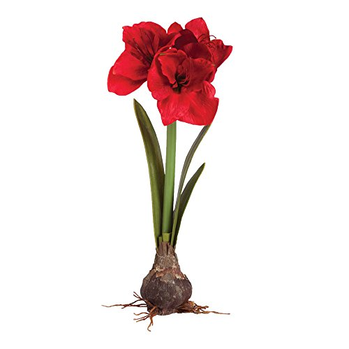 Amaryllis Vase - Napa Home & Garden Faux Amaryllis Bulb Drop-In, Red