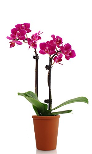 Just Add Ice 260777 Orchid Decorative Pot, 2.5