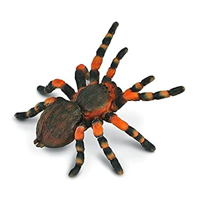 CollectA Insects Mexican Redknee Tarantula Toy Figure - Authentic Hand Painted Arachnid Model: Toys & Games