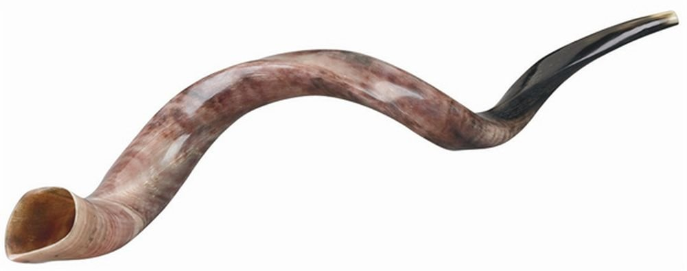 Original Yemenite Shofar Horn Kudu Polished Natural 29 -33