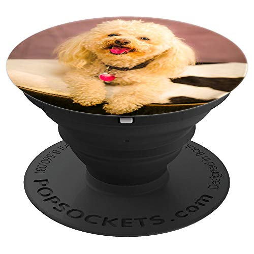 Meet Stella The Poodle In The Studio - PopSockets Grip and Stand for Phones and Tablets