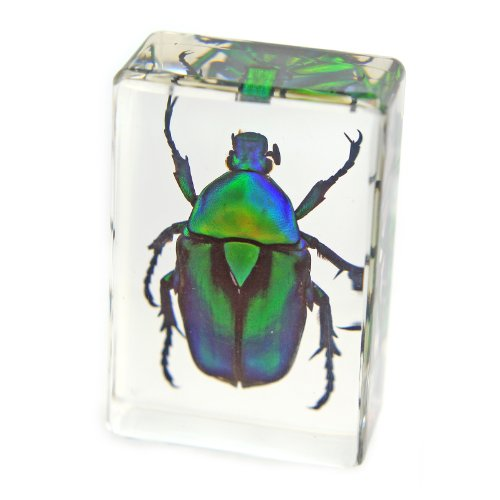 "Green Chafer Beetle Paperweight (1 1/8 x 1 3/4 x 3/4"")"
