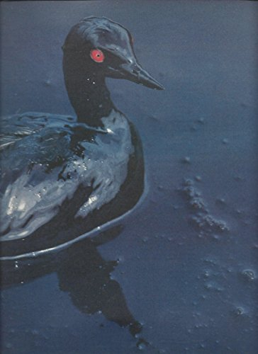 print-ad-for-benetton-1996-controversy-series-duck-covered-in-oil-scene